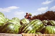 Watermelone Man
