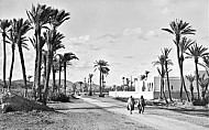Palms in Marrakesh